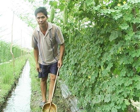 Anh Nguyễn Minh Sang chăm sóc khổ qua.