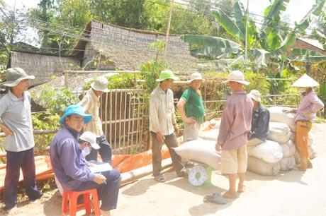 Tham gia CĐML, ND xã Thạnh Lộc (huyện Cai Lậy) phấn khởi vì công ty xuống mua lúa tại ruộng và trả tiền ngay.