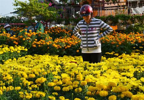 Hội hoa xuân luôn thu hút khách tham quan và mua sắm. Ảnh: Vân Anh