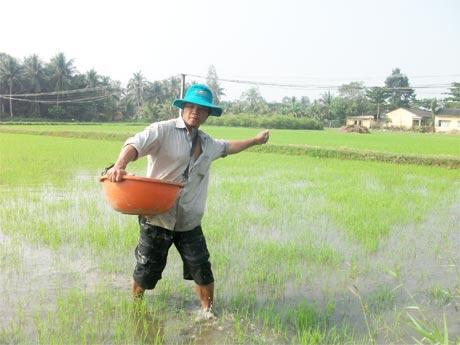 Nông dân xã Thạnh Nhựt (Gò Công Tây) chăm sóc lúa đông xuân 2013-2014.
