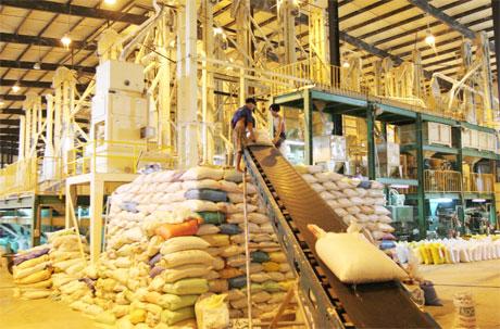 Bên trong một dây chuyển chế biến gạo xuất khẩu. Ảnh: Vân Anh