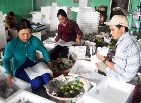Vựa thu mua trái cây đóng gói chuyển đi miền Bắc, miền Trung.