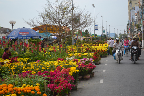 Các dãy hoa Cúc và Vạn Thọ... được bày bán gần bờ sông.