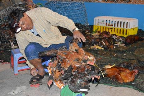 Mua bán gia cầm sống tại chợ Tam Long, huyện Cai Lậy. Ảnh: Vân Anh