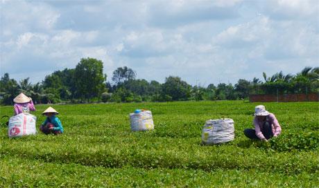 Hộ nghèo tại huyện Tân Phú Đông sẽ được vay vốn lãi suất từ Ngân hàng CSXH (Ảnh mang tích chất minh họa). Ảnh: Vân Anh