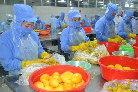 Chế biến trái cây xuất khẩu tại Công ty TNHH Một thành viên Long Uyên.