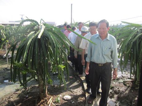 Hôị CCB tham quan mô hình trồng thanh long tại gia đình CCB Nguyễn Văn Trợ.