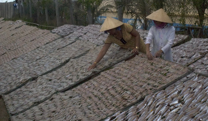 Dried fish village in Vam Lang town