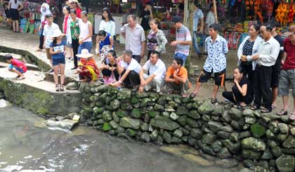 Visiting Cam Luong Fish Stream in Thanh Hoa province