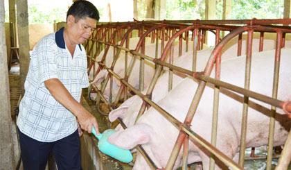 Anh Nguyễn Nghĩa Dũng vươn lên từ chăn nuôi heo.
