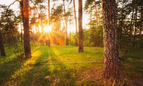 Một rừng cây ở nước Nga. Ảnh: Grisha Bruev/Shutterstock.