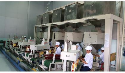 Hệ thống đóng gói gạo chất lượng cao theo tiêu chuẩn HACCP tại Tigifood.