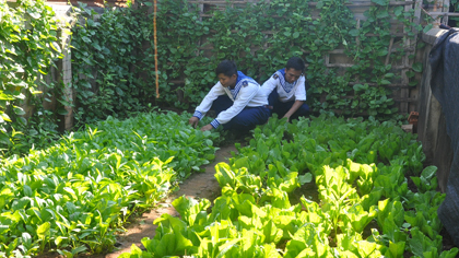 Planting vegetables in Truong Sa island district