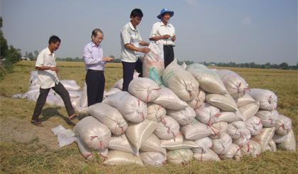Ông Lê Thanh Khiêm (thứ 2 từ trái sang) kiểm tra chất lượng lúa trong vụ đông xuân 2015 - 2016 tại xã Hậu Mỹ Trinh (huyện Cái Bè).