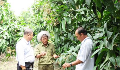Ông Tể (giữa) chia sẻ kinh nghiệm trồng xoài với bà con nông dân.
