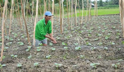 Nông dân trồng rau vụ tết rất phấn khởi vì giá rau đang ở mức cao.