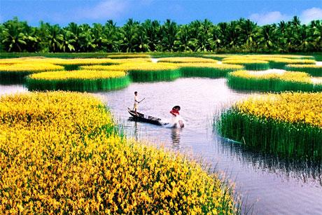 Đồng bằng sông Cửu Long là một bộ phận của châu thổ sông Mê Kông có diện tích 39.734 km2. Ảnh: Nguyễn Thanh Dũng