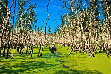 Những hoạt động hỗn hợp của sông và biển đã hình thành những vạt đất phù sa phì nhiêu, màu mỡ. Dọc theo đê ven sông lẫn dọc theo một số giồng cát ven biển và đất phèn trên trầm tích đầm mặn trũng thấp như vùng Đồng Tháp Mười, tứ giác Long Xuyên - Hà Tiên, Tây Nam sông Hậu và bán đảo Cà Mau. Ảnh: Nguyễn Hữu Thành