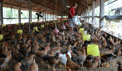 Measures against bird flu stepped up