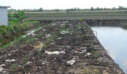 Những bao chứa chất thải còn nằm trơ trên mặt đất vì lấp không kỹ.