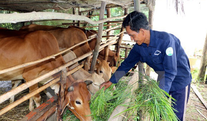 Ben Tre strives for sustainable poverty alleviation
