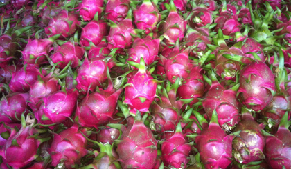 EU - Potential market for Vietnamese fruit and vegetable exports
