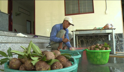 The price of sapote in Chau Thanh district goes up