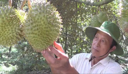 Outseasonable durian fetches high prices