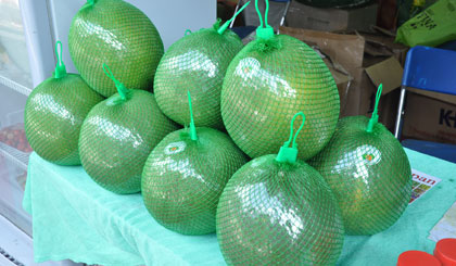 Rising to get rich by planting green grapefruit