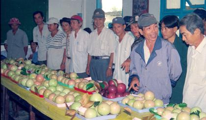 Vú sữa Lò Rèn Vĩnh Kim (huyện Châu Thành) nổi tiếng trong và ngoài nước.                                                                                                                                                                                                                                                  Ảnh: NGỌC LAN