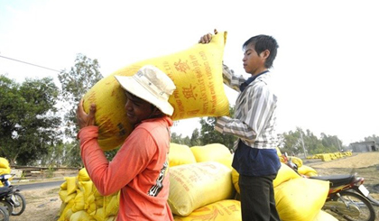 Rice farmers rue missing out on price rise