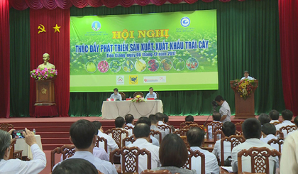 Finding solutions to develop production, promote export fruit