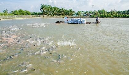 Finding direction for tra fish exports