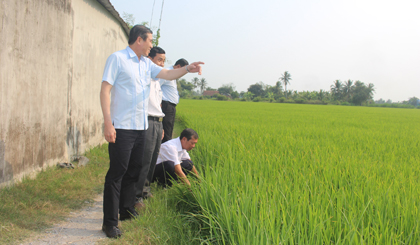 Chairman of the PPC visits fields on the day near Tet