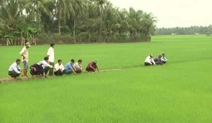 Tien Giang province to implement the application of 4.0 technology in rice production