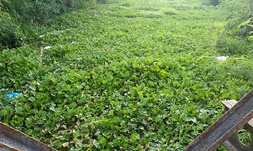Voter petitioned for concerned issues. Photo: P.MAIWaste and water hyacinth cause environmental pollution at Tham Thu drainage, Thanh Cong commune