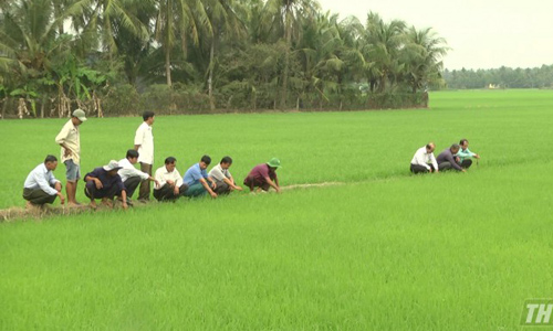 Representatives from DARD and farmers visited rice fields of 16 hectares using 4.0 technology. Picture: Ba Thuy