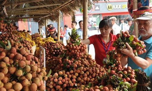 Longan and lychee season experiences record revenue