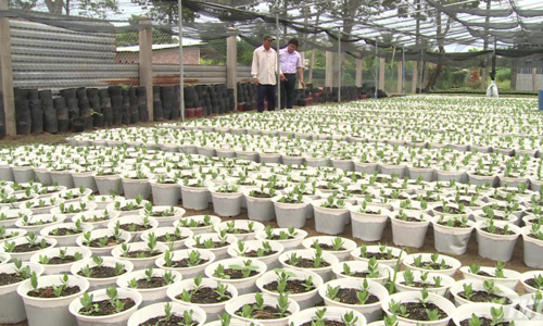 One million fresh flower baskets for the Lunar New Year 2019