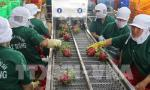 Many bright spots in Vietnam's economy: experts