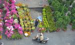 Flower markets to welcome Tet