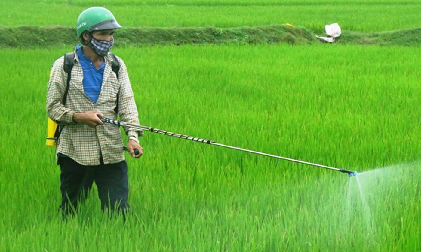 A farmer sprays plant protection chemicals (Source: VNA)