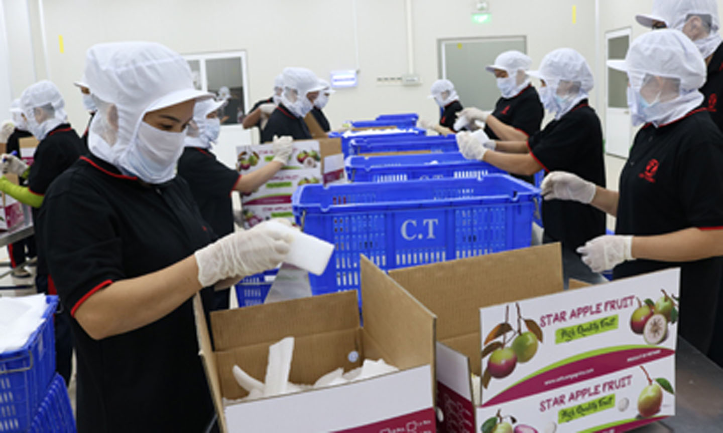 Tien Giang province strives to export more than 4.7% for 2019