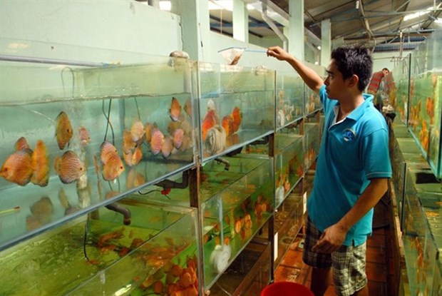 Potential for ornamental fish exports remains high