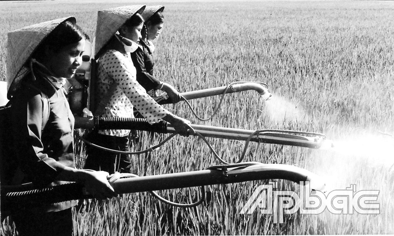 Nông dân xã Tam Hiệp  (huyện Châu Thành,  tỉnh Tiền Giang) ra quân  diệt rầy năm 1978. Ảnh: TL