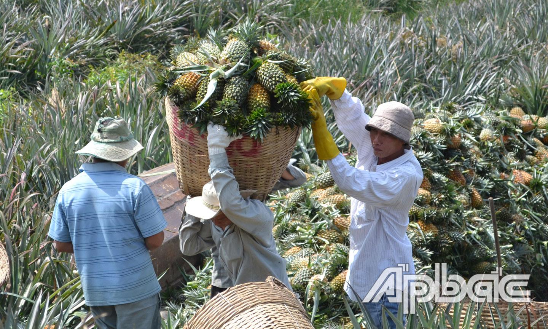 Việc tiêu thụ trái cây thực hiện qua nhiều trung gian nên khi đến người tiêu dùng có giá cao.